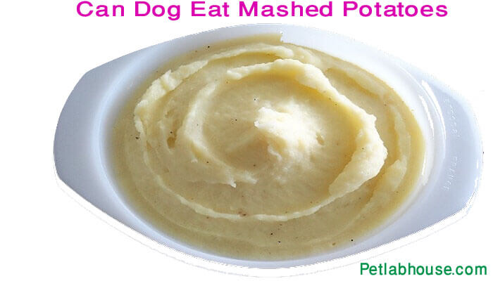Can dog eat mashed potatoes