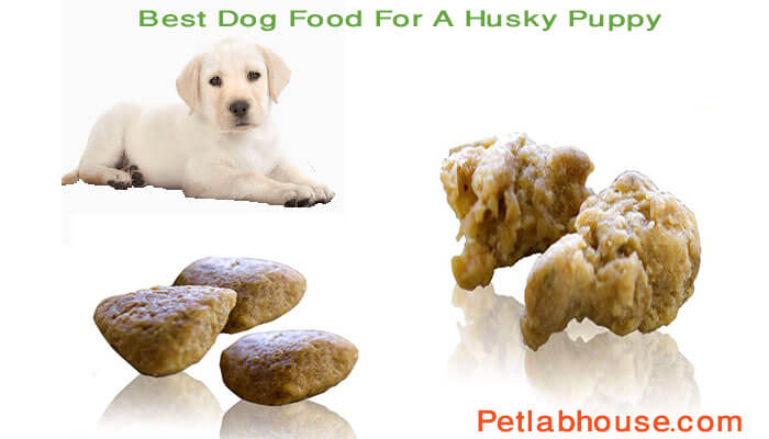 Best Dog Food For A Husky Puppy