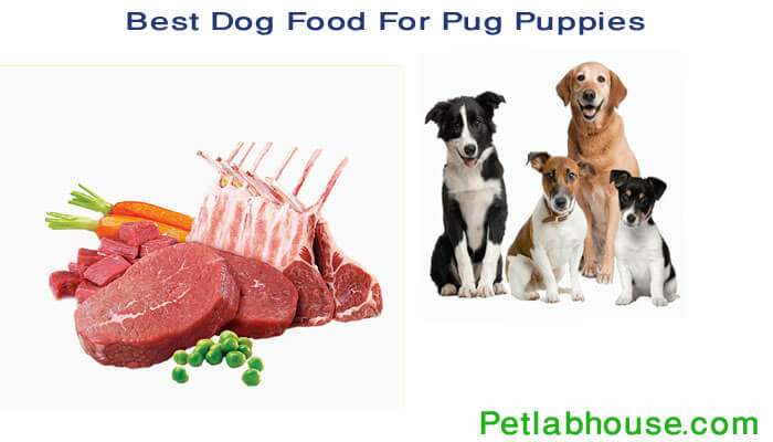 Best Dog Food For Pug Puppies