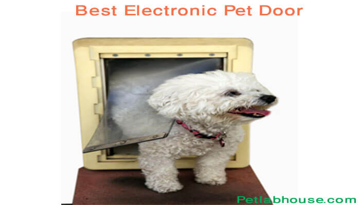 Best Electronic pet Door