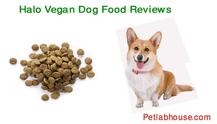 halo vegan dog food reviews
