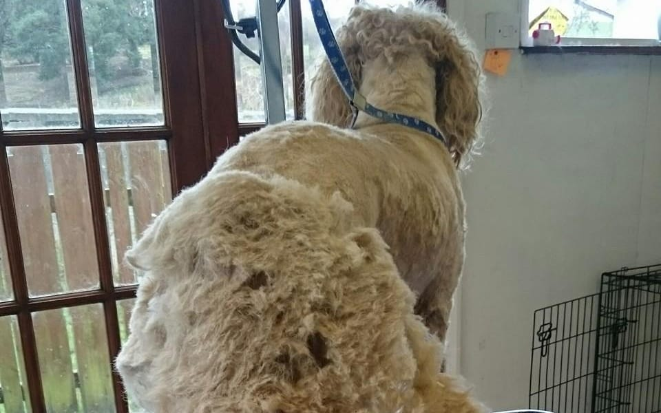 Best Dog Grooming Clippers for Thick Coats